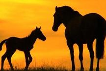 * a Horse for Morgan ... / by Nannette Serrano