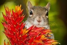- Squirrel -!!!- / by Nannette Serrano