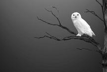 Owl.  / by Nannette Serrano