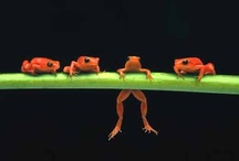 ANIMALS...That TOADally Croaks! / FROGS