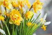 Decorations | Spring | Lente