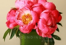 our peonies