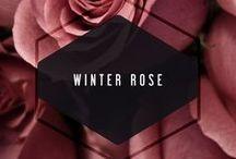 Winter Rose / inspiration
