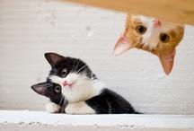 Lovely Cats / by Akihiko Hirose