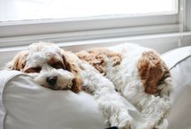 Puppies & babies / by Megan Massey