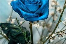Brilliantly Blue* / Anything & Everything in Blue
