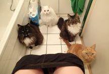 cat crazy / by Bunny Missbrenner