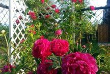 Christine Lindsay's Garden / www.christinelindsay.org