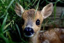 Animals! :) / by Deidra Willms