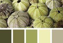 Patterns & Paint Palettes