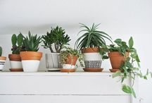 Interior Flora