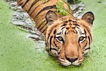 Jungle Fever / Jungle fever inspirations across the globe.  / by MyFamilyTravels.com