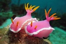 nudibranch obsession