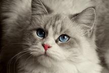 Cats! / by Roberta Loa
