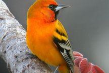 Birds / by Nancy Colcord