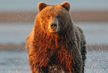 Bears ~Bears~ Bears / by Nancy Colcord