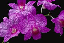 Beautiful Flowers! / by Roberta Loa