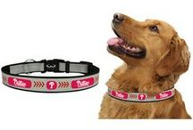 Pet Gear / Show your Phillies spirit with your furry friends!   Dress your pet like a true Philadelphia Phillies fan with a selection of pet apparel and other team-themed accessories for animal companions.