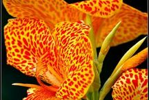 Garden Daylily-Lily  / Collection of daylillies and lillies / by Lawncare Plus Design~Landscaping Hardscaping Patios Gardening