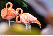 Flora and Fauna Mexico / Plants and wildlife in the Riviera Maya / by Cancun Studios Professional Photography