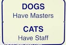 KAT & HOND / Foto's van honden & katten in leuke posities.