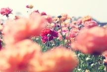 floral / by Mapet Diaz