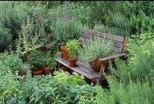 Much Virtue in Herbs / little in men. ~Benjamin Franklin / by Van Waffle