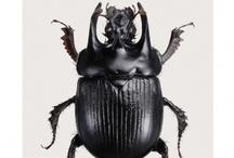 a bug's life / by Mapet Diaz