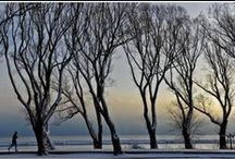 Trees are Poems / that Earth writes upon the sky./We fell them down and turn them into paper,/That we may record our emptiness. ~Kahlil Gibran / by Van Waffle