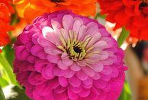 flowers / by BizEmom .