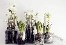 green thumbs {plants}