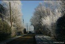 Winter / Frosty trees