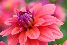flowers / by Terri Hamilton