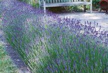 Garden / Garden design and landscape. California emphasis.  / by Charity Bower