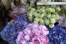 °*° Flowers °*°