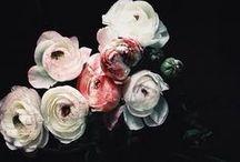 Botanic Ritual / by Meredyth Gravely Owen