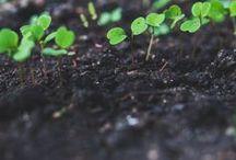 Spiritual Growth / Spiritual Motivation, Bible Verses