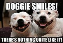 Just for Giggles / Need a little giggle...we have it for you! These dogs do some crazy funny things to keep you entertained!