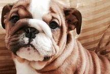 Doggies / by Karoline Begin