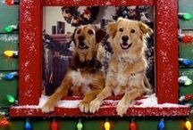 Holiday Cheer / Cute and funny ways our pets' show us they are in the Holiday Spirit!
