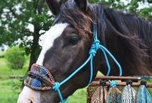 Halters & Leads / by Teskey's Saddle Shop & Bootique