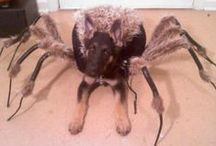 Trick-or-Treat / We all love to look at pets that are dressed up in cute, funny and even the most outrageous costumes for Halloween and wonder if our pets would let us do that to them!  Here are some great pictures and ideas for the upcoming years!