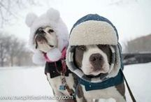 Winter Wonderland / Are your pets ready for the cold, ice, and snow?!?!