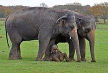 Elephants make me happy / by Diane Anthony