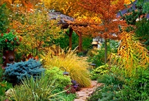 Great Gardens!! / by Adrienne Berry