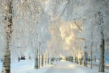 Winter Wonderland / by HelmsBriscoe