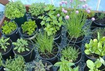 Gardening / Gardening and gardening hints and tips / by Bida Grant