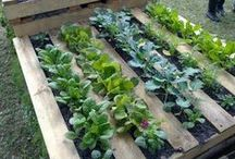 Organic Gardening @ the Gatsby House