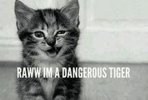 { C a t s <3 } / I <3 CATS