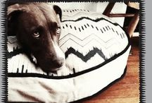 doggy stuff / by Katie Wohl